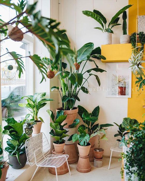 Bí quyết bắt đầu một bộ sưu tập cây trong nhà