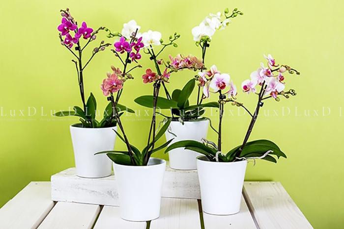 Cách chăm sóc lan ra hoa lần nữa
