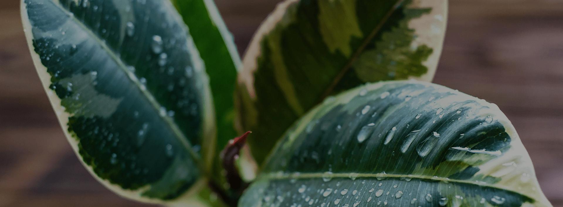 Hoa cảnh - LuxD