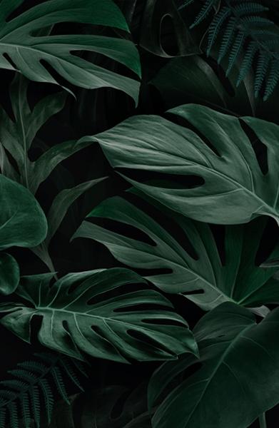 cây giả phong cách tropical