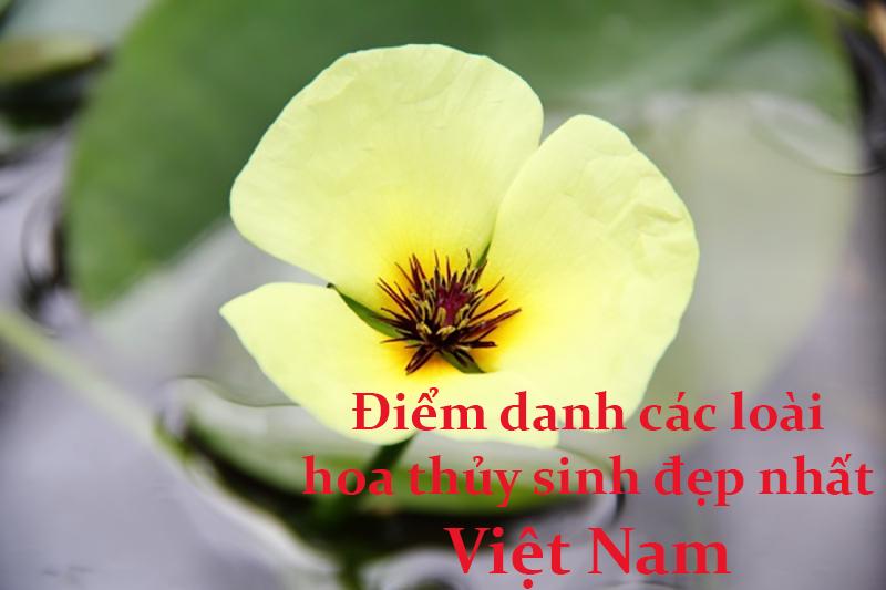 Top 6 loài hoa thủy sinh đẹp nhất Việt Nam