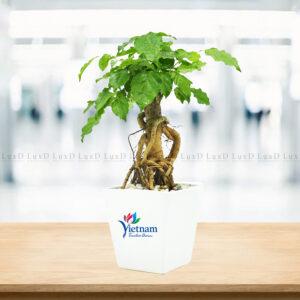 Chậu cây in logo thương hiệu VietNam Timeless Charm