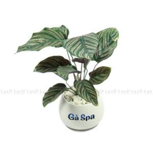Chậu cây in thương hiệu Gà Spa